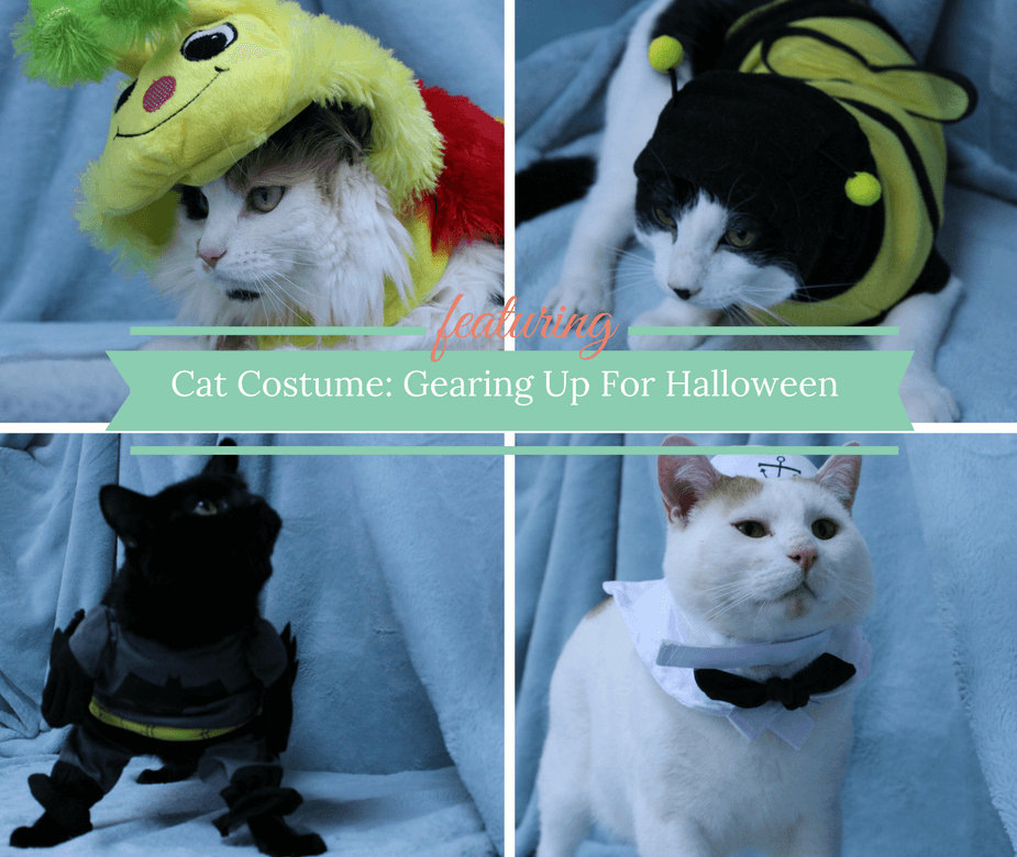 cat-costume-gearing-up-for-halloween
